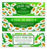 Spring daisy flowers banner set design. Spring daisy flowers banner set. Blooming white chamomile on green grass field cartoon floral greeting poster for Royalty Free Stock Image