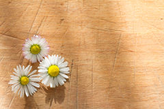 Spring daisy on vintage wooden retro background Royalty Free Stock Photography