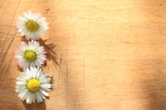Spring daisy on vintage wooden retro background Stock Photography