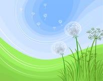 Spring dandelion. Vector illustration of dandelions, background Stock Photos