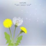 Spring dandelion flowers Stock Image