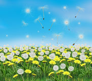 Spring dandelion landscape Illustration Royalty Free Stock Photos