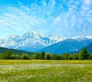 Spring dandelion mountain meadow Stock Photos