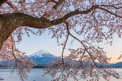 Spring Dawn Mt. Fuji royalty free stock images