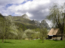 Spring day in Carpathian Stock Images