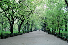 Spring day in Central Park, New York Stock Image