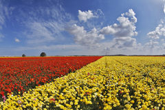 The spring day in fields flowers Royalty Free Stock Image