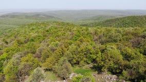 Top view over forest area - Macin Mountains - Romania, Dobrogea stock footage
