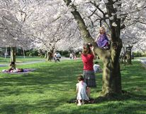 Spring Day in Kenwood Maryland Stock Photo