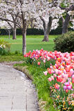 Spring Day in a park with blooming trees Stock Image