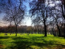 Spring day in a park. A picture of a spring day in a park,The green parkof big trees and people relaxing in the distance,in London UK Stock Photo
