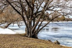 Spring day on river. Spring day river tree forest water stock photography
