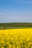 Spring day in rural area Stock Images