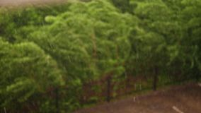 Spring day, thunderstorm in city, strong wind and rain, a downpour with hail. focus on big drops of rain, in city park