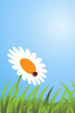 Spring day - vector. Illustration of a spring day with grass, a daisy and a ladybird.EPS file available Stock Photography