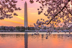 Spring in DC Royalty Free Stock Photo