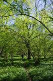 Spring in the deciduous forest Stock Photo