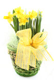 Spring decoration Royalty Free Stock Images