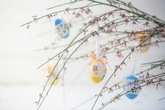 Spring decoration, bouquet of blooming genista or broom with han Stock Photography