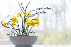 Spring decoration, daffodils and pussy willow in a ceramic bowl. In front of a window, copy space in the blurry background Stock Images