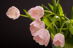 Spring decoration. Pink tulips in a vase Stock Photos