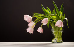 Spring decoration. Pink tulips in a vase Royalty Free Stock Images