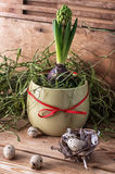Spring decoration Stock Images