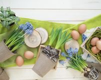 Spring decorative composition. Flowers in a basket and pots of hyacinth, muscari, narcissus. Wooden background. Cozy decor of the Easter. Easter eggs. Colors Stock Image