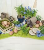 Spring decorative composition. Flowers in a basket and pots of hyacinth, muscari, narcissus. Wooden background. Cozy decor of the Easter. Easter eggs. Colors Stock Photos