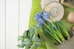 Spring decorative composition. Flowers in a basket and pots of hyacinth, muscari, narcissus. Wooden background. Cozy decor of the Easter. Easter eggs. Colors Royalty Free Stock Photos