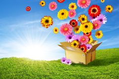 Spring Delivery. Colorful flowers emerging from a cardboard box delivering spring over the green hills Royalty Free Stock Photos