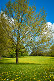 Spring in Denmark Royalty Free Stock Photography
