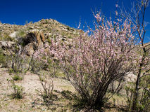 Spring in the desert Royalty Free Stock Images