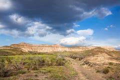 Spring in the desert Stock Photography