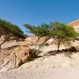 Spring Desert Stock Photography