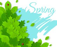 Spring design with green leaves. Spring concept Royalty Free Stock Images