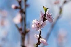 Spring detail Royalty Free Stock Image