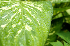 Spring dew. A drop of dew in spring stock image
