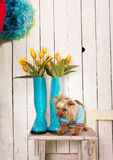 Spring doggy Royalty Free Stock Images