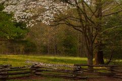 Spring Dogwood Stock Photography