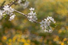 Spring doily stock photos