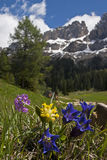 spring in Dolomites Stock Photography