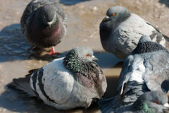 Spring and doves Stock Images