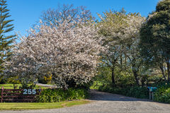 Spring Driveway Entrance Stock Image