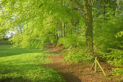 Spring early morning light filtering through Beech trees, Painswick, England, UK Stock Photography