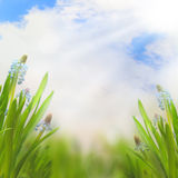 Spring Easter background with beautiful flowers