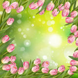 Spring Easter background. EPS 10. Spring Easter background with beautiful pink tulips. Summer flower background. EPS 10 vector file included Stock Images