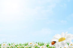 Spring easter border. Spring and easter border with daisy and ladybird on blue sky background royalty free stock photos