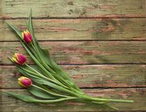 Spring bouquet of three tulip flowers on wooden background. Flat lay view with copy space. Spring Easter bouquet of three tulip flowers on wooden background royalty free stock images