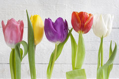 Spring easter colorful tulips on white vintage background Stock Photography
